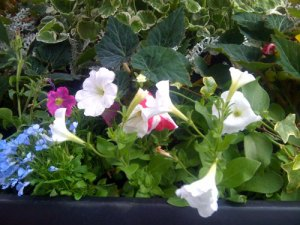 planter-1